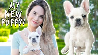 I Got A New Puppy! + Dog Haul