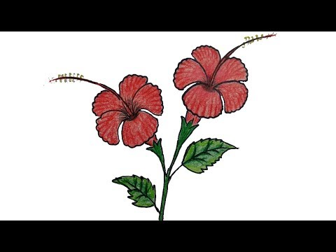 How to draw a Hibiscus flower step by step | China Rose / Joba Ful Drawing