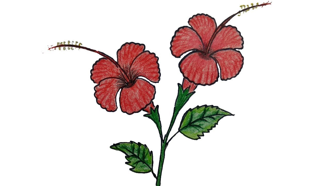 How To Draw A Hibiscus Flower Step By Step China Rose Joba Ful