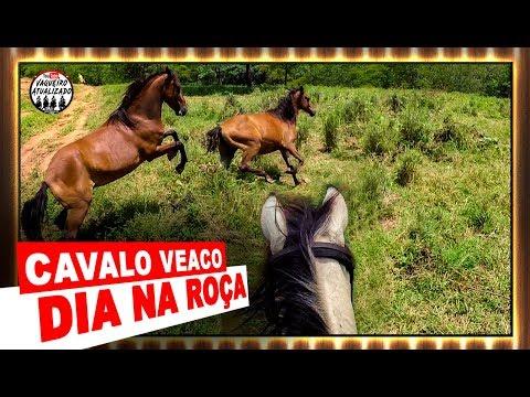 Cavalo Veaco -Dia Na Roça-