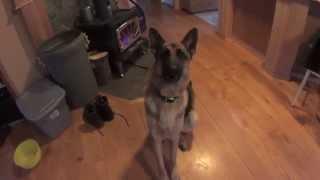 Dugan the talking dog says