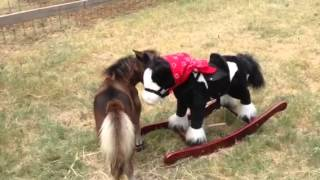 Hank The Dwarf Mini Horse And His New Friend...