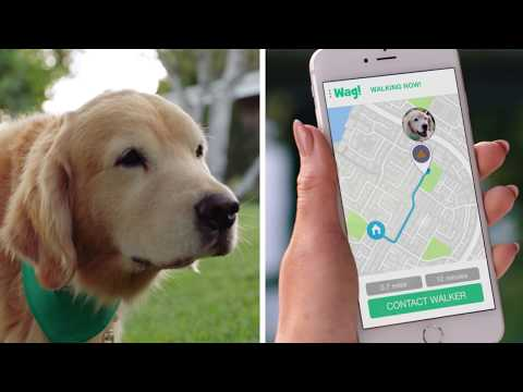 Wag! The #1 On-Demand Dog Walking App! (60s)