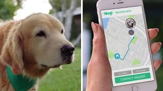 Download lagu Wag The 1 On Demand Dog Walking App MP3
