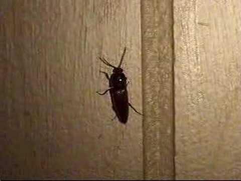 Lightning Bug / Firefly On The Wall - YouTube