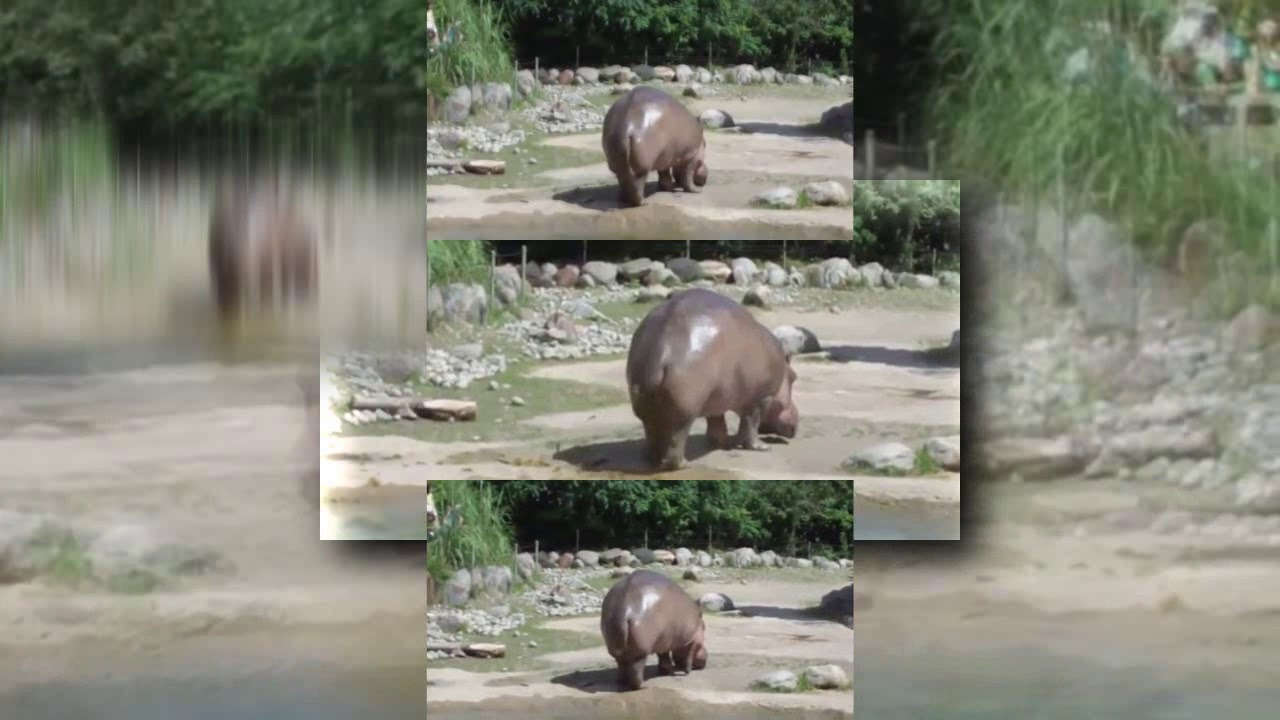 Hippo Farts Youtube – Billy Knight