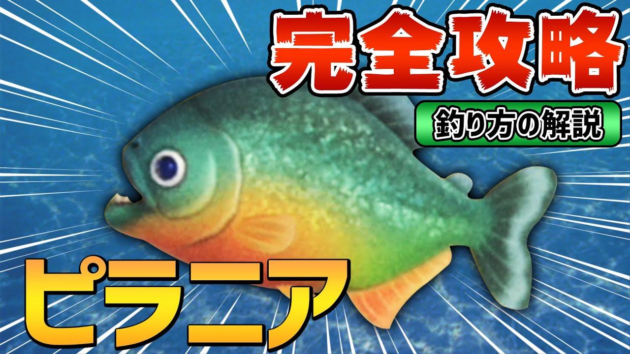 あつ森 魚 湧く条件
