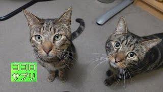 散歩から帰って来た愛猫の首輪に手紙が。そこに書かれていたメッセージに飼い主さんは感動… thumbnail