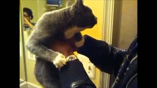 Говорящие коты видео приколы