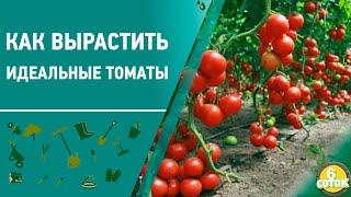 Как вырастить идеальные томаты. 6 соток 05.10.2020