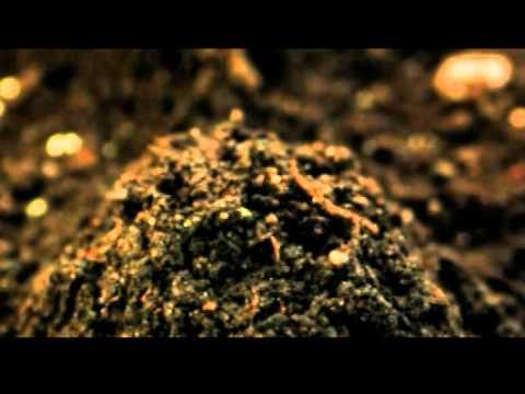 """Sappi """"Plant a seed, grow an idea"""""""
