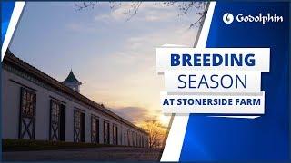 Breeding season at Stonerside Farm