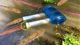 👌 Creative Man Make Fish Trap Using Water Bottle And Plastic Pipes in Pond to Catch A Lot Of Fish