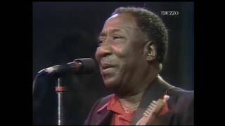 Muddy Waters • Live In Montreal 1980