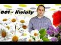 Akcent - Pszczółka Maja (Wersja 2015) - YouTube