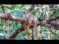 Amazon Jungle Trip by Outlanders (Leticia)