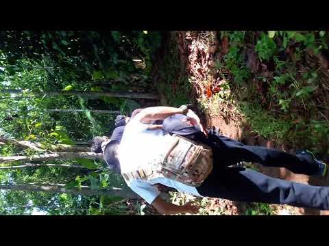 Tercyduk ikeh2 di tengah hutan thumbnail