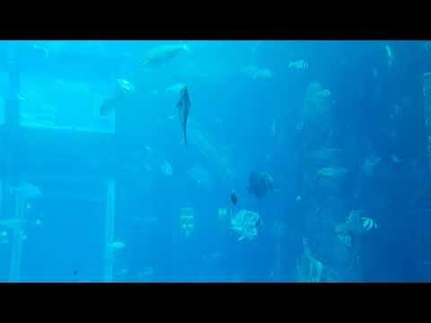 Atlantis the Palm, Dubai | Lost Chambers Aquarium