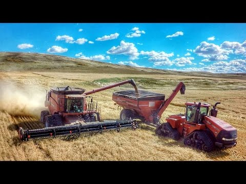 Schultz Farm 2016