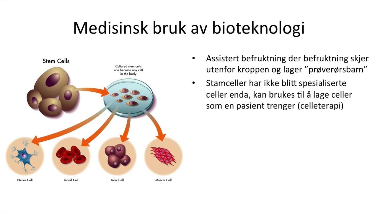 stamceller og celleterapi