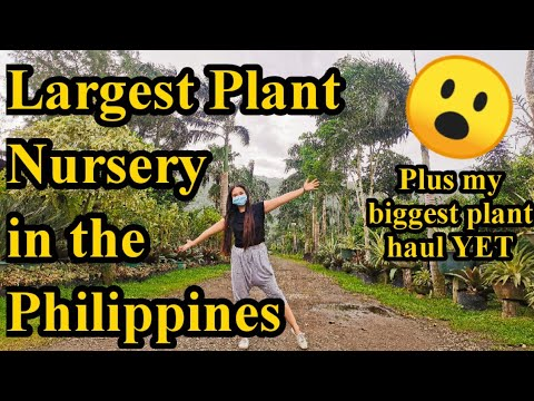 Tour sa Largest Plant Nursery in the Philippines at last plant haul for year 2020