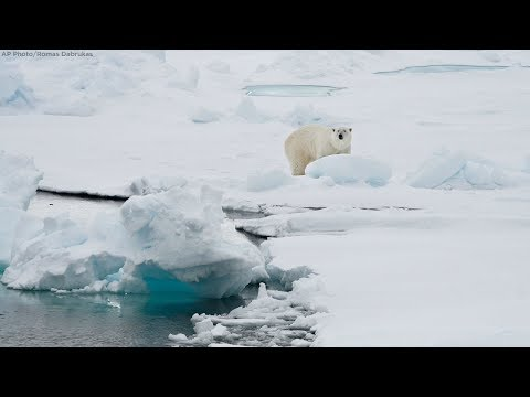 Polar bear killed after attacking cruise line employee