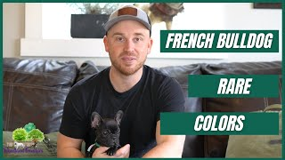 Rare French Bulldog Colors: Chocolate, Brindle, Blue or Merle?