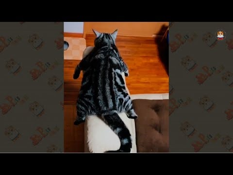Funny Cats Video 2017 # 25