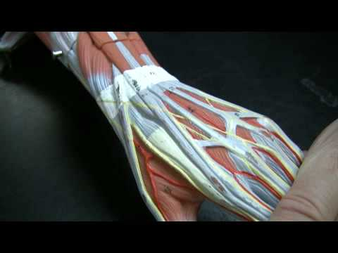 how to help a pulled muscle in arm