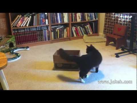 Clicker Trained Cat: 30 Amazing Cat Tricks