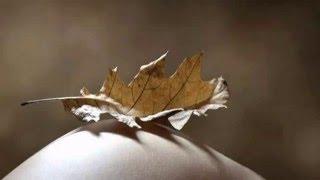 Eva Cassidy Autumn Leaves