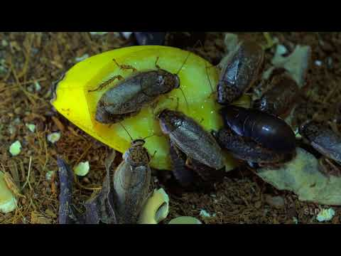 WHAT HAPPENS IF A COCKROACH SMOKES 20 CIGARETTES