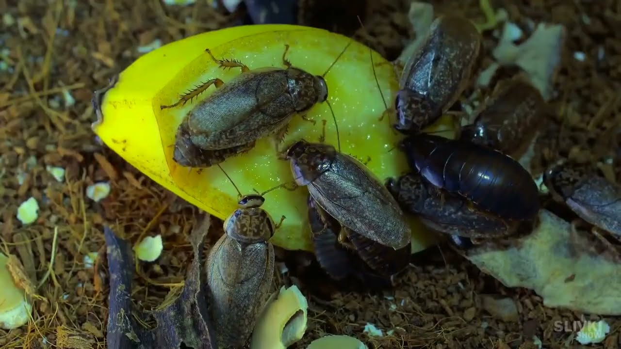 Download WHAT HAPPENS IF A COCKROACH SMOKES 20 CIGARETTES