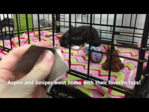 Aspen and Juniper were Adopted Today to the Best Homes!!