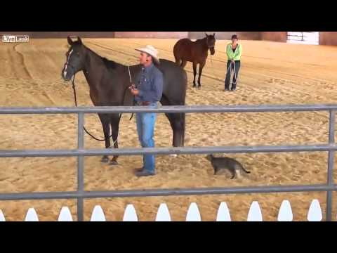 Crazy Cat Attacks Horse
