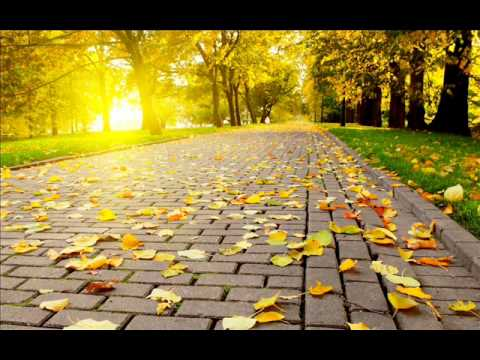 Adult Swim Bump Autumn Walkway Youtube