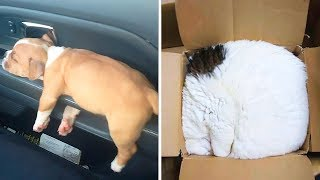 44 Доказательств того, что Животные Могут Спать Где Угодно!