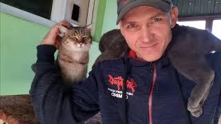 ♂ Deaf  Cat cute