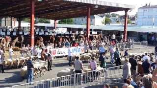 Race ovine Bleu du Maine - Evron 2013 cérémonie de cloture
