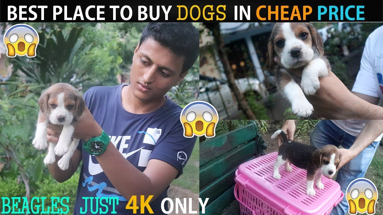 Cheap Dogs Market Wholesale Retail Dogs In Cheap Price With