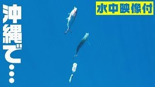 とくさんがUVERworldのtakuya∞さんと約束した「沖縄で釣った美味しい魚...