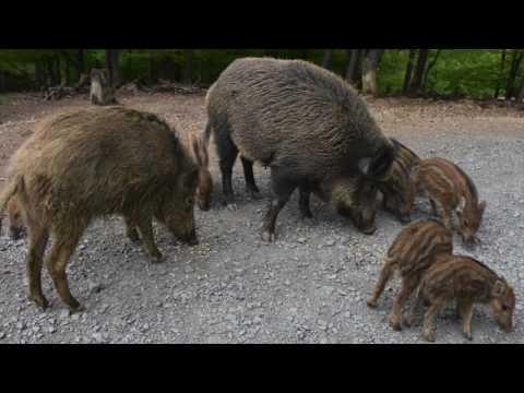 Wildpark und Erlebnispark Daun (Eifel) (( Lang Version))/ Europe 's biggest Wildlife Park in Germany