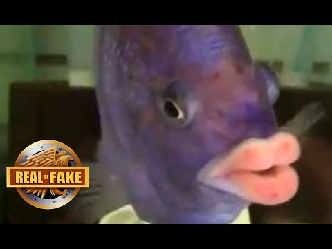 FISH WITH HUMAN LIPS - real or fake?