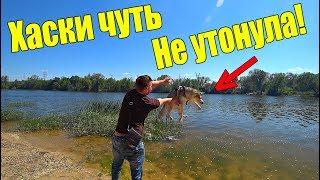 ХАСКИ ЧУТЬ НЕ УТОНУЛА!? КИДАЕМ ПОИСКОВОЙ МАГНИТ! / Виталий Зеленый