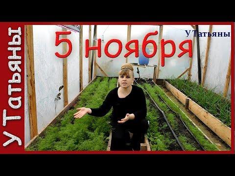 Мой поздний урожай в ноябре: лук, укроп, редис в теплице!