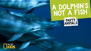 A Dolphin's Not a Fish | Party Animals