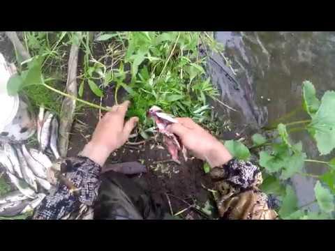 Как сохранить хариуса на рыбалке