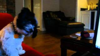 Punky Brewster Watches The Jingle Bell Barking Dogs