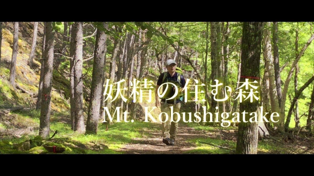 不思議な苔の森の住人と登る甲武信ヶ岳