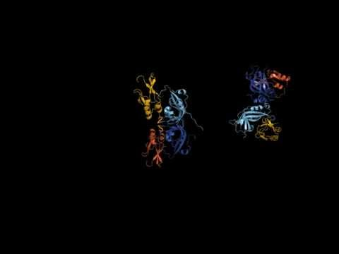 Ebola Virus Protein: Butterfly to Ring
